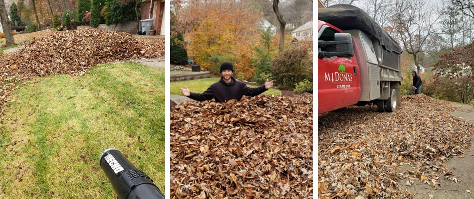 Our team members removing leaves and debris from a property in McMurray, PA.