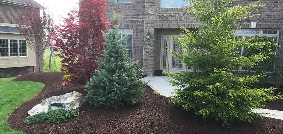 Spruce trees are among the common plants and trees installed in Venetia landscaping designs.